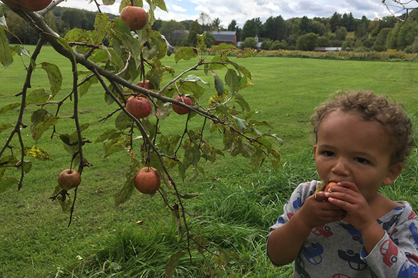 town orchard1